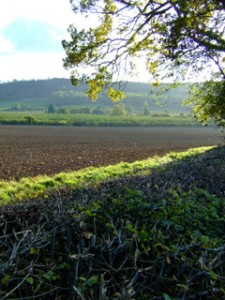 Photograph of ploughed field and tree